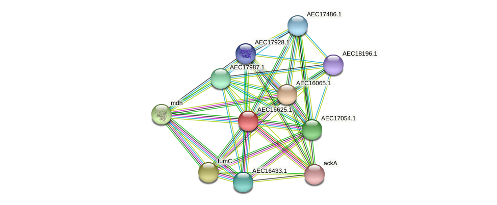 UMN179_00591 protein (Gallibacterium anatis) - STRING interaction network