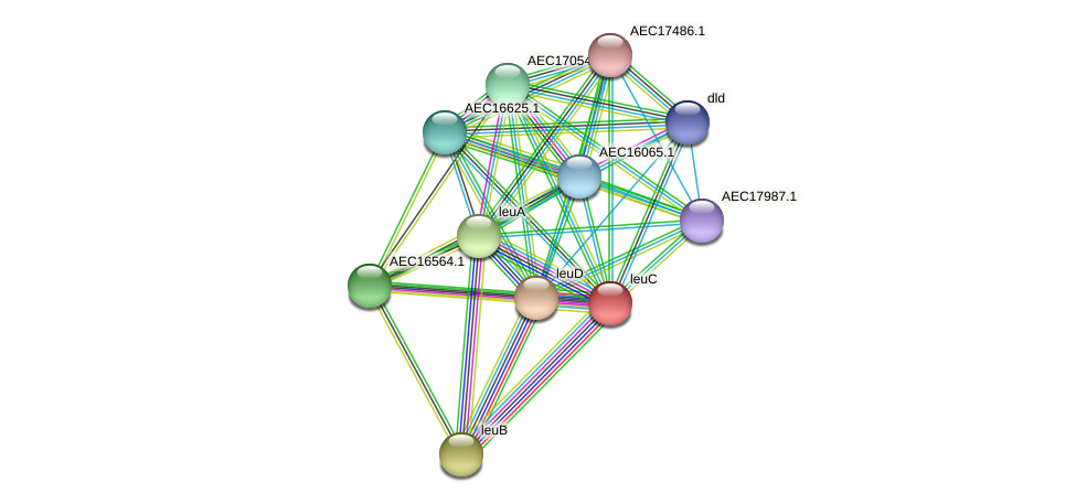 leuC protein (Gallibacterium anatis) - STRING interaction network