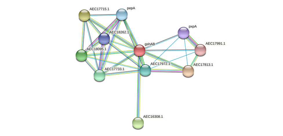 gshF protein (Gallibacterium anatis) - STRING interaction network