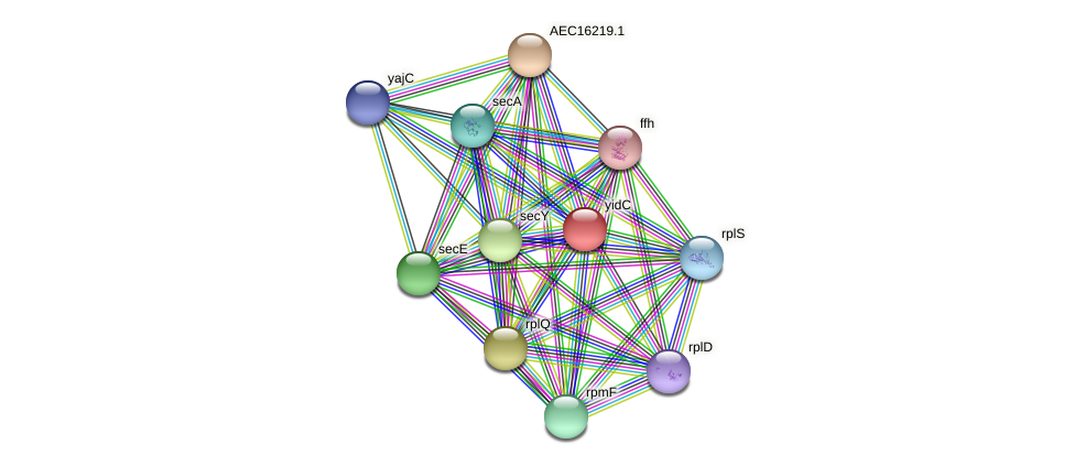 yidC protein (Gallibacterium anatis) - STRING interaction network