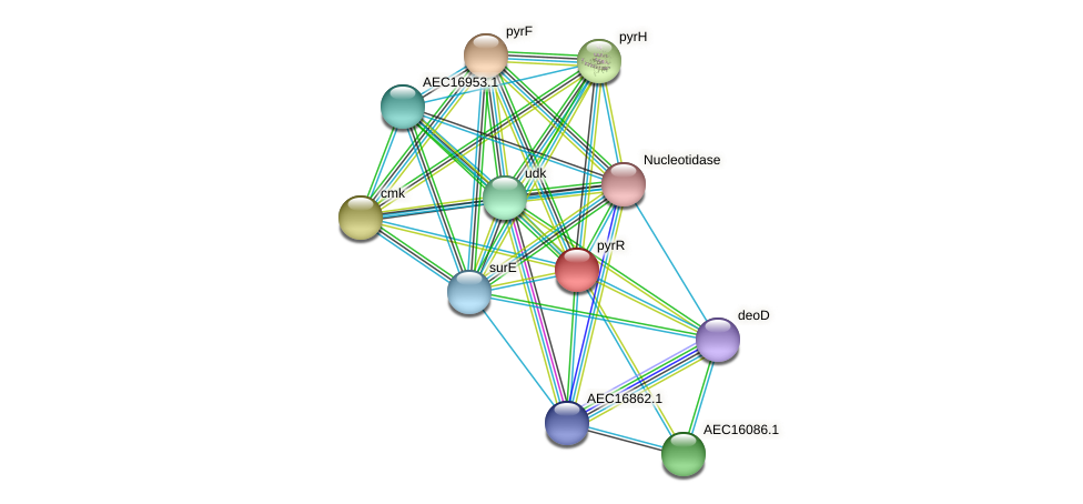 pyrR protein (Gallibacterium anatis) - STRING interaction network