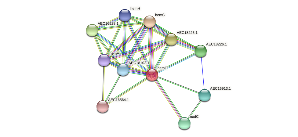 hemE protein (Gallibacterium anatis) - STRING interaction network