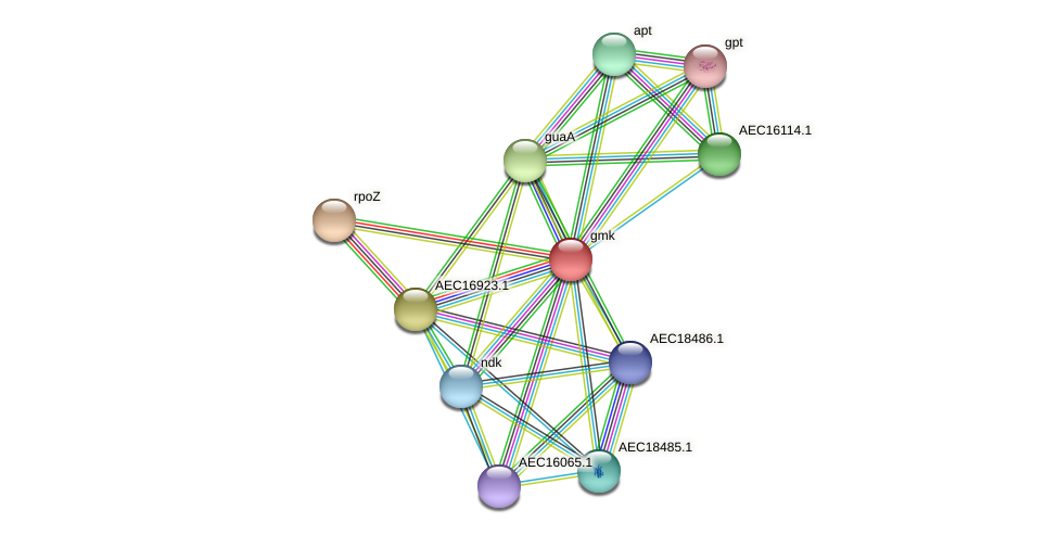 gmk protein (Gallibacterium anatis) - STRING interaction network