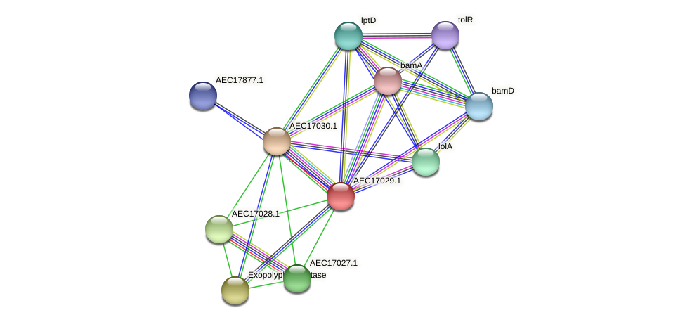 UMN179_01001 protein (Gallibacterium anatis) - STRING interaction network