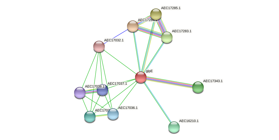 glpE protein (Gallibacterium anatis) - STRING interaction network