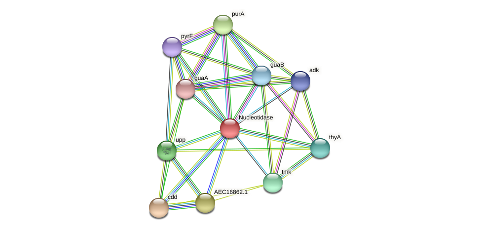 UMN179_01014 protein (Gallibacterium anatis) - STRING interaction network