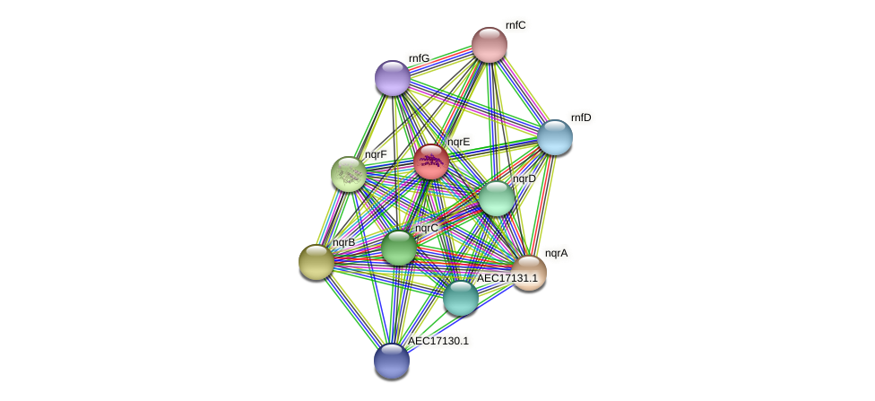 nqrE protein (Gallibacterium anatis) - STRING interaction network