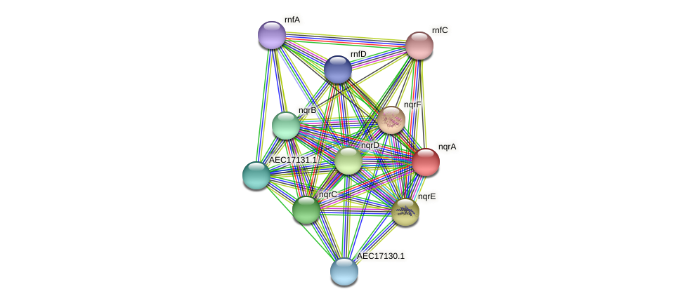 nqrA protein (Gallibacterium anatis) - STRING interaction network