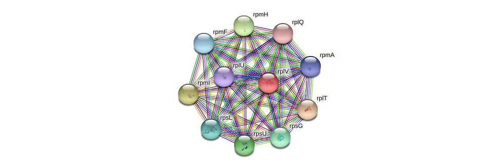 rplV protein (Gallibacterium anatis) - STRING interaction network