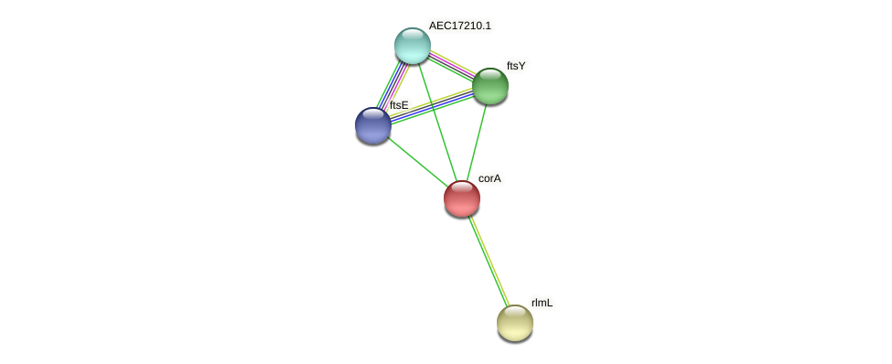 corA protein (Gallibacterium anatis) - STRING interaction network