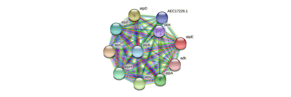 UMN179_01201 protein (Gallibacterium anatis) - STRING interaction network