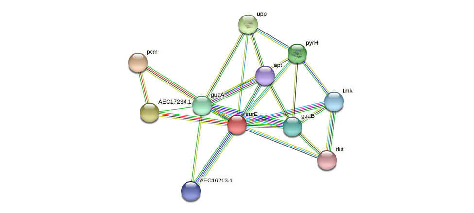 surE protein (Gallibacterium anatis) - STRING interaction network