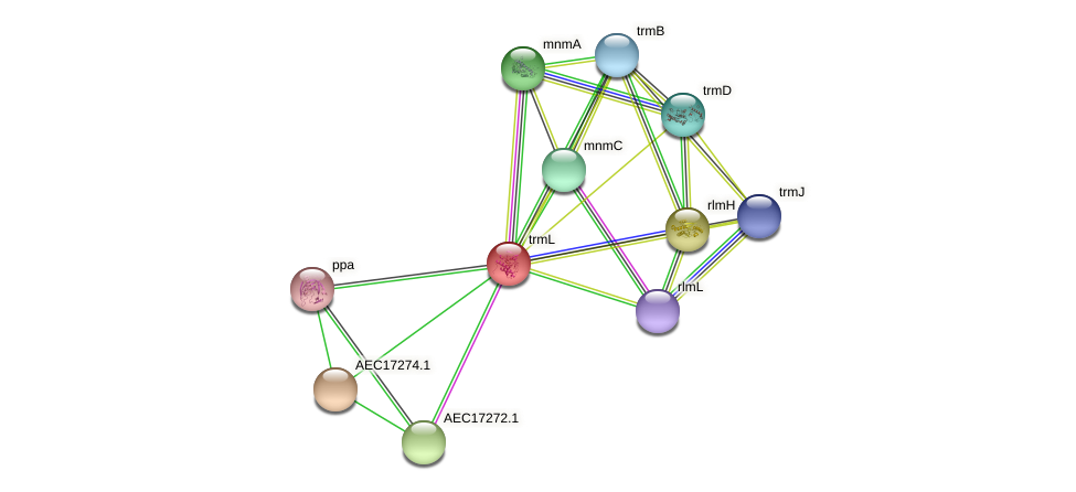 trmL protein (Gallibacterium anatis) - STRING interaction network