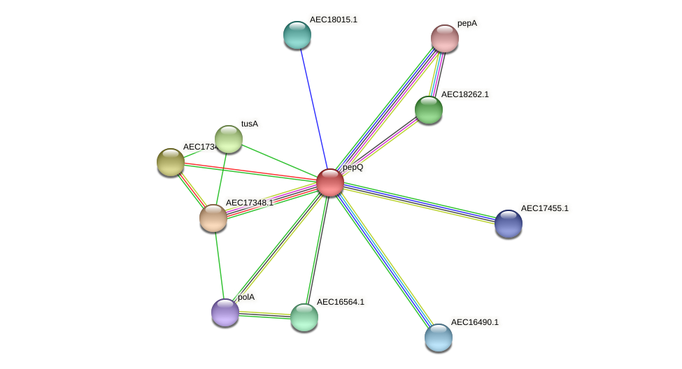 pepQ protein (Gallibacterium anatis) - STRING interaction network