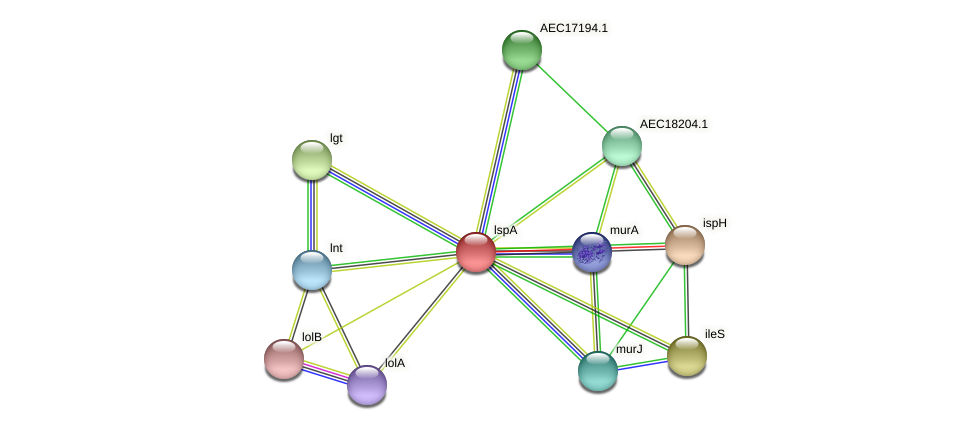 lspA protein (Gallibacterium anatis) - STRING interaction network