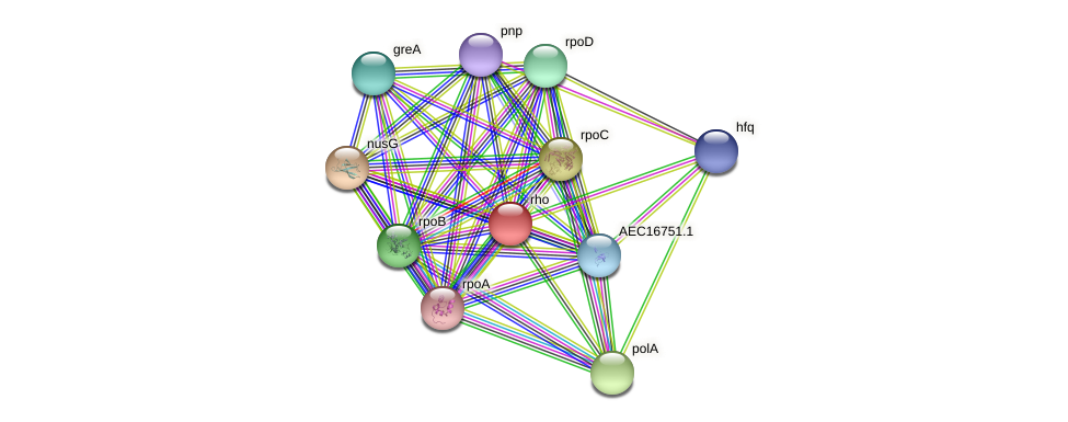 rho protein (Gallibacterium anatis) - STRING interaction network