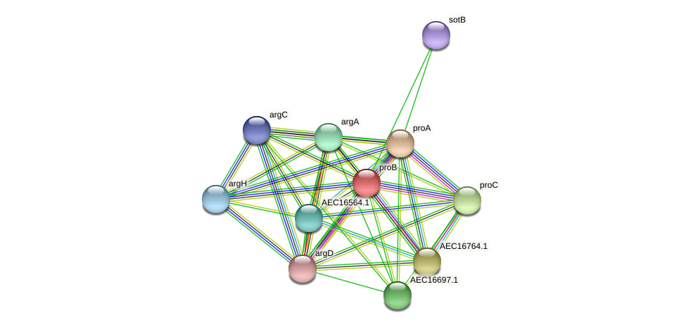 proB protein (Gallibacterium anatis) - STRING interaction network