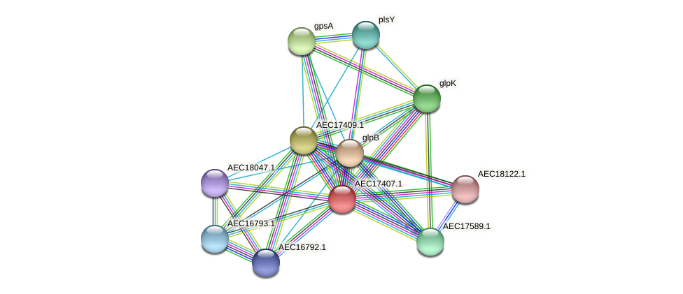 UMN179_01388 protein (Gallibacterium anatis) - STRING interaction network