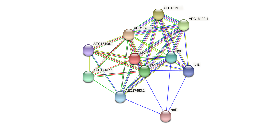 lptC protein (Gallibacterium anatis) - STRING interaction network