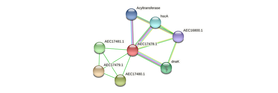 UMN179_01461 protein (Gallibacterium anatis) - STRING interaction network