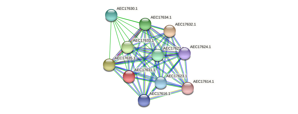 UMN179_01614 protein (Gallibacterium anatis) - STRING interaction network