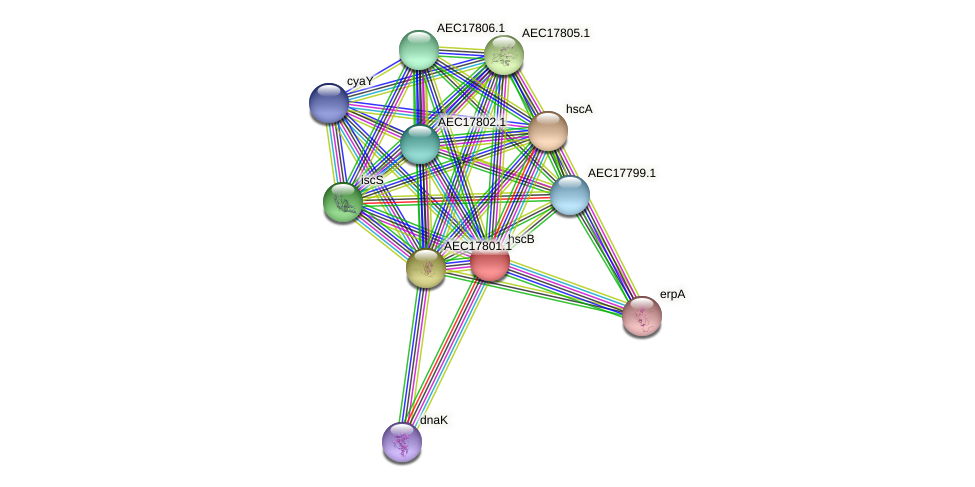 hscB protein (Gallibacterium anatis) - STRING interaction network