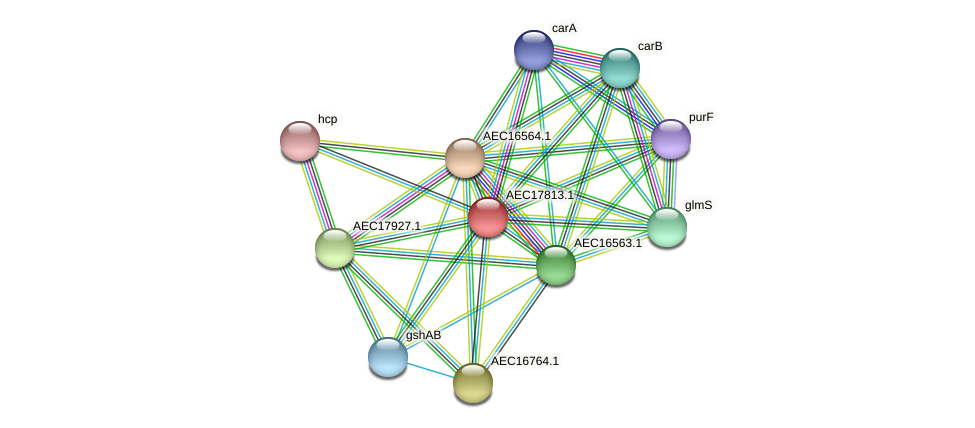 UMN179_01798 protein (Gallibacterium anatis) - STRING interaction network
