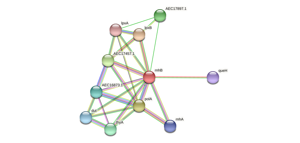 rnhB protein (Gallibacterium anatis) - STRING interaction network
