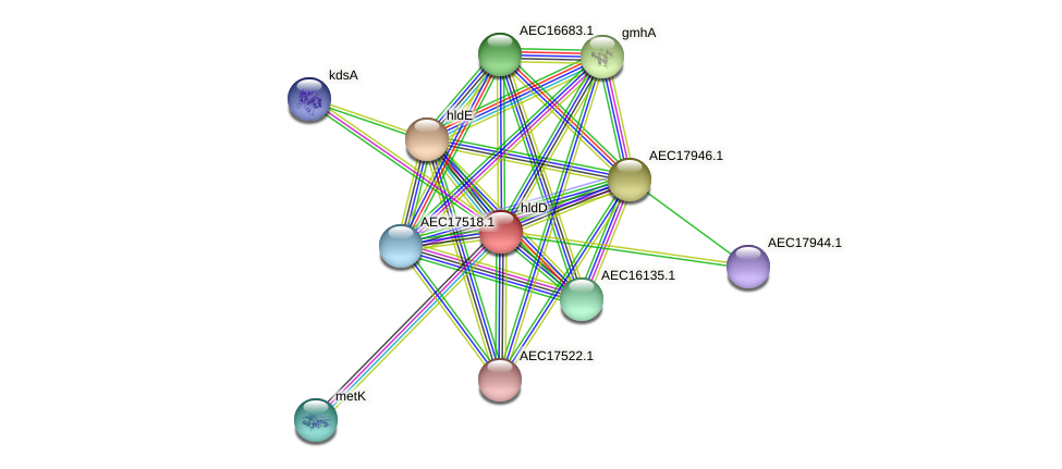 hldD protein (Gallibacterium anatis) - STRING interaction network