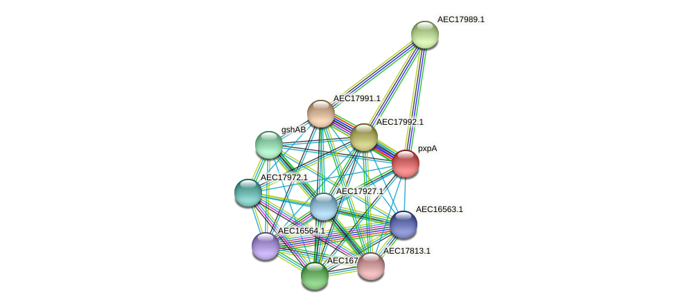 UMN179_01977 protein (Gallibacterium anatis) - STRING interaction network