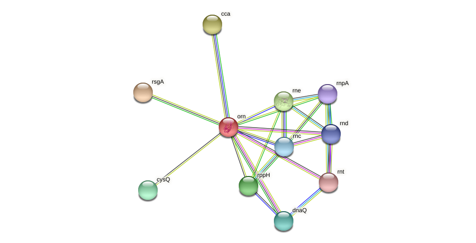 orn protein (Gallibacterium anatis) - STRING interaction network