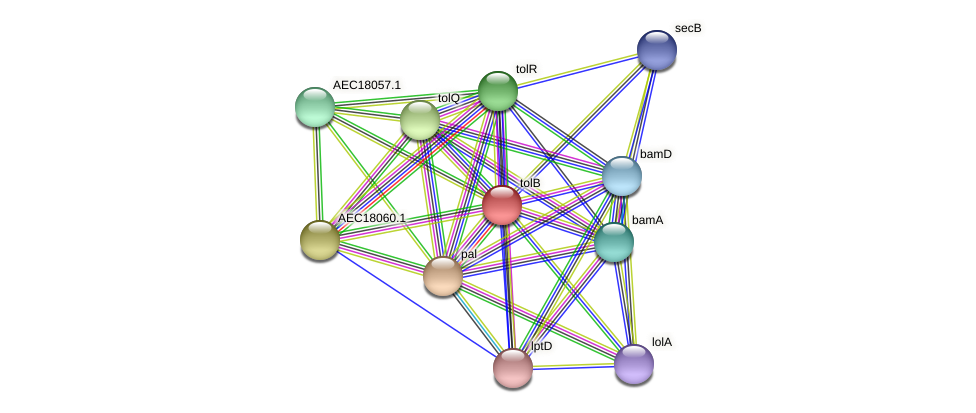 tolB protein (Gallibacterium anatis) - STRING interaction network