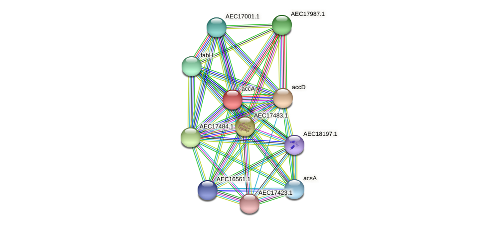 accA protein (Gallibacterium anatis) - STRING interaction network