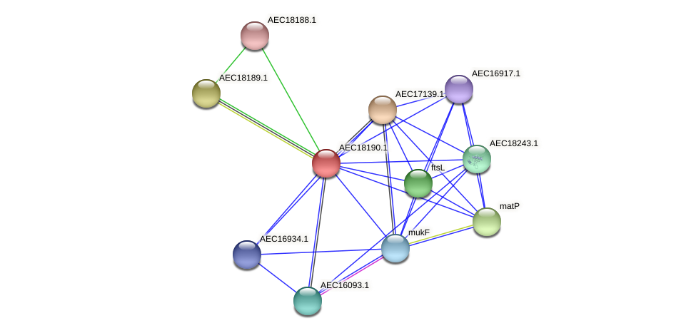 UMN179_02177 protein (Gallibacterium anatis) - STRING interaction network