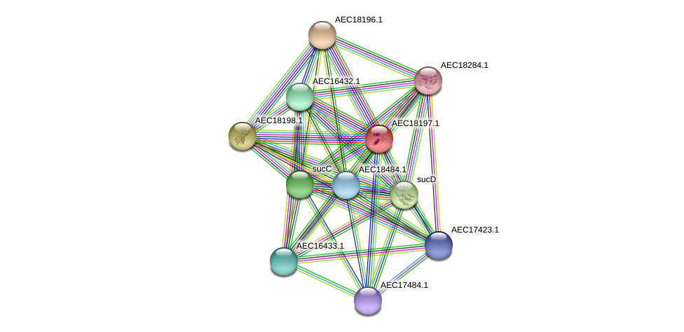 UMN179_02184 protein (Gallibacterium anatis) - STRING interaction network