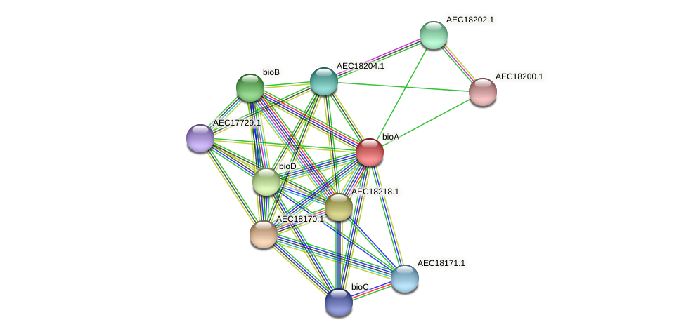 bioA protein (Gallibacterium anatis) - STRING interaction network