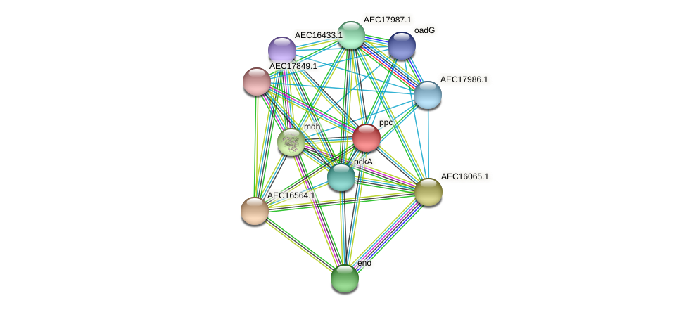 ppc protein (Gallibacterium anatis) - STRING interaction network
