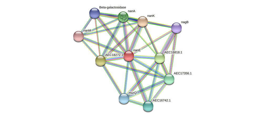 nanE protein (Gallibacterium anatis) - STRING interaction network