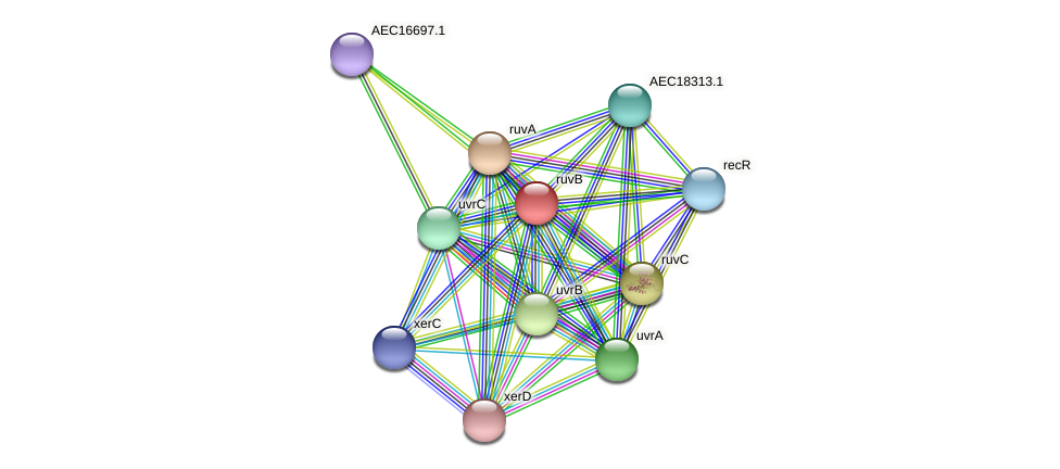ruvB protein (Gallibacterium anatis) - STRING interaction network