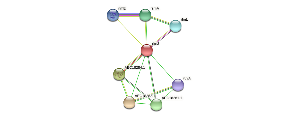 rlmJ protein (Gallibacterium anatis) - STRING interaction network