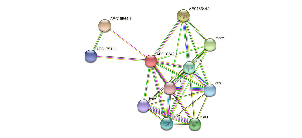 UMN179_02334 protein (Gallibacterium anatis) - STRING interaction network