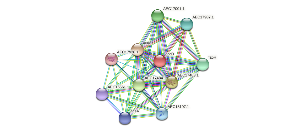 accD protein (Gallibacterium anatis) - STRING interaction network