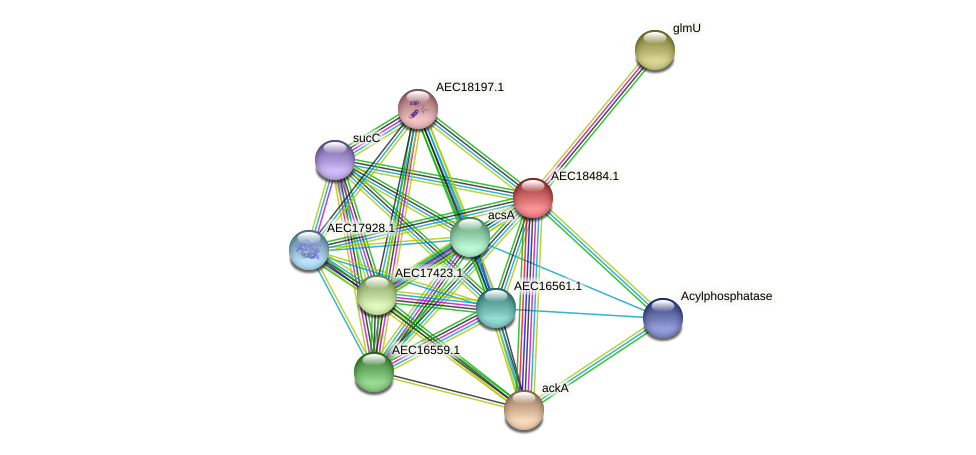 UMN179_02477 protein (Gallibacterium anatis) - STRING interaction network