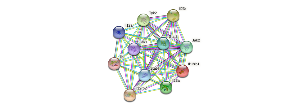 Il12rb1 protein (mouse) - STRING interaction network