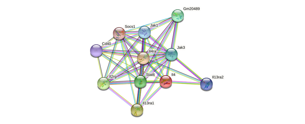Il4 protein (mouse) - STRING interaction network