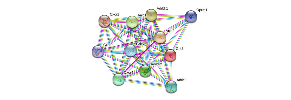 Grk6 protein (mouse) - STRING interaction network