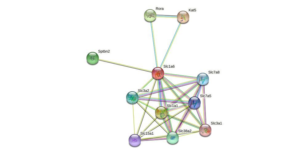 Slc1a6 protein (mouse) - STRING interaction network