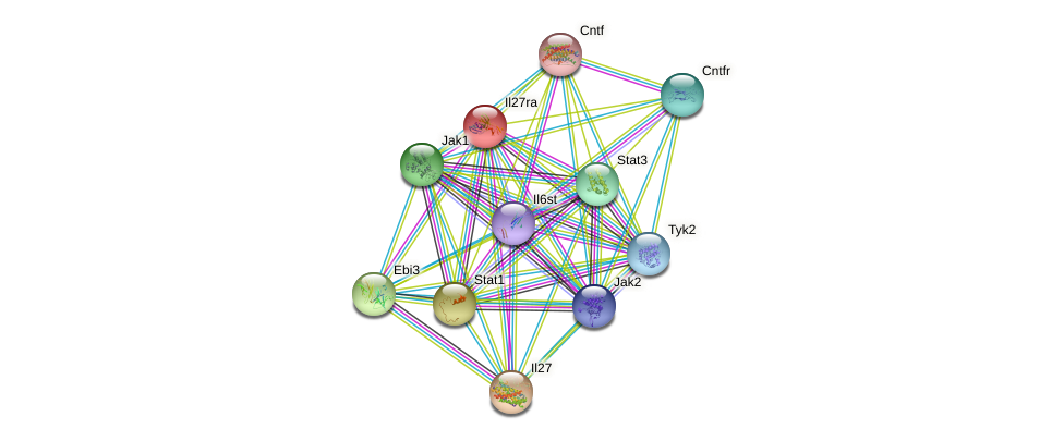 Il27ra protein (mouse) - STRING interaction network