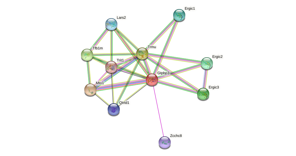 Gtpbp3 protein (mouse) - STRING interaction network