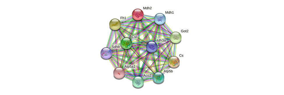 Mdh2 protein (mouse) - STRING interaction network